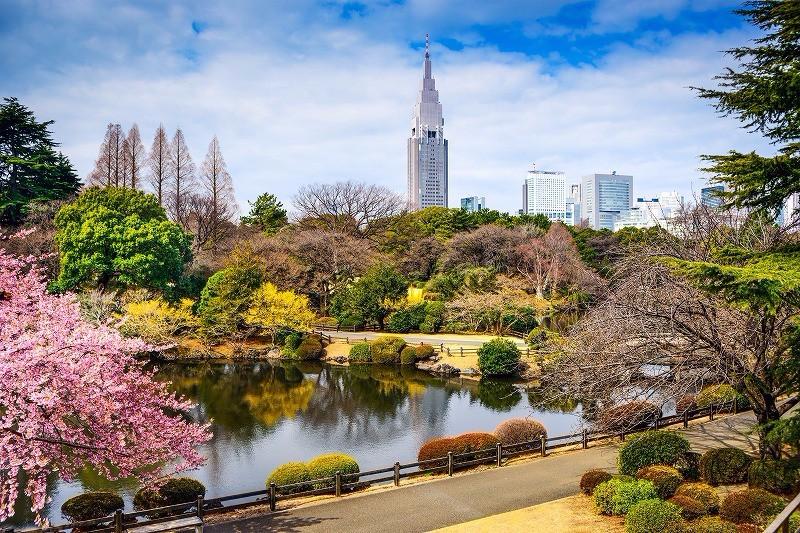 東京 新宿御苑:來東京的後花園享受盛開的櫻花吧 賞櫻景點 2