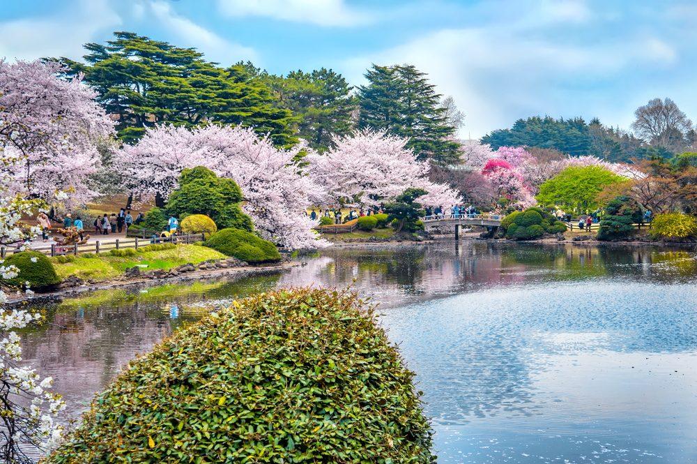 東京 新宿御苑:來東京的後花園享受盛開的櫻花吧 賞櫻景點